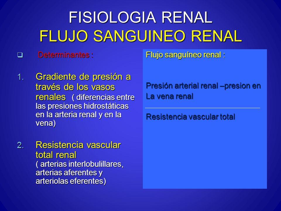 FISIOLOGIA RENAL FLUJO SANGUINEO RENAL Determinantes : Determinantes : 1. Gradiente de presión a través de los vasos renales ( diferencias entre las p