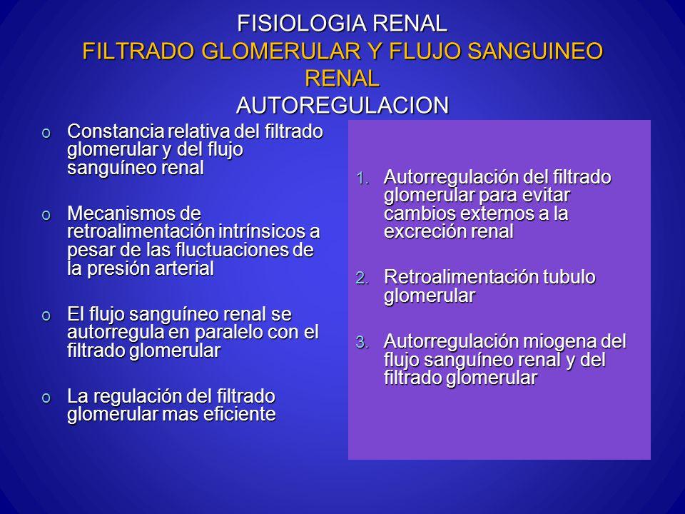 FISIOLOGIA RENAL FILTRADO GLOMERULAR Y FLUJO SANGUINEO RENAL AUTOREGULACION o Constancia relativa del filtrado glomerular y del flujo sanguíneo renal