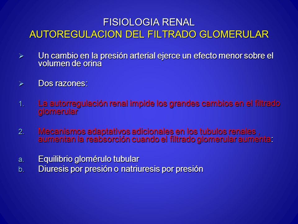 FISIOLOGIA RENAL AUTOREGULACION DEL FILTRADO GLOMERULAR Un cambio en la presión arterial ejerce un efecto menor sobre el volumen de orina Un cambio en