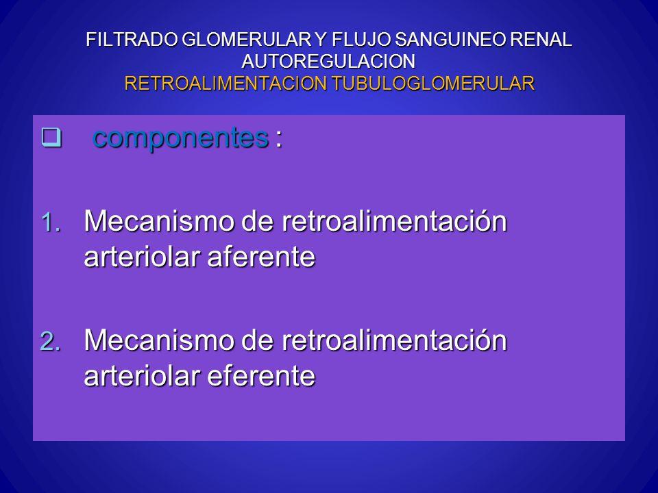 FILTRADO GLOMERULAR Y FLUJO SANGUINEO RENAL AUTOREGULACION RETROALIMENTACION TUBULOGLOMERULAR componentes : componentes : 1. Mecanismo de retroaliment