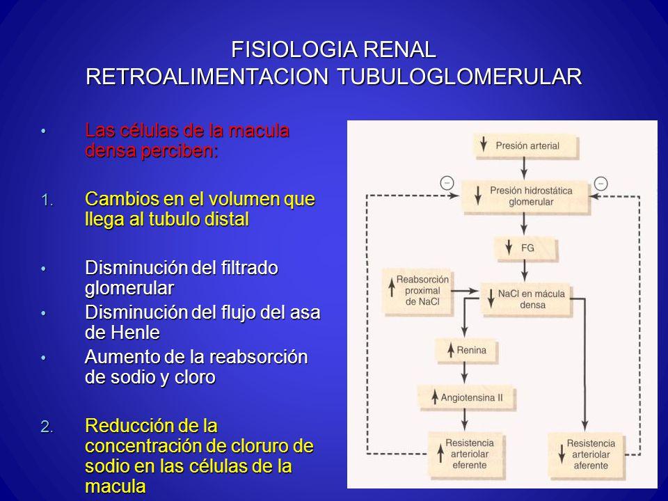 FISIOLOGIA RENAL RETROALIMENTACION TUBULOGLOMERULAR Las células de la macula densa perciben: Las células de la macula densa perciben: 1. Cambios en el