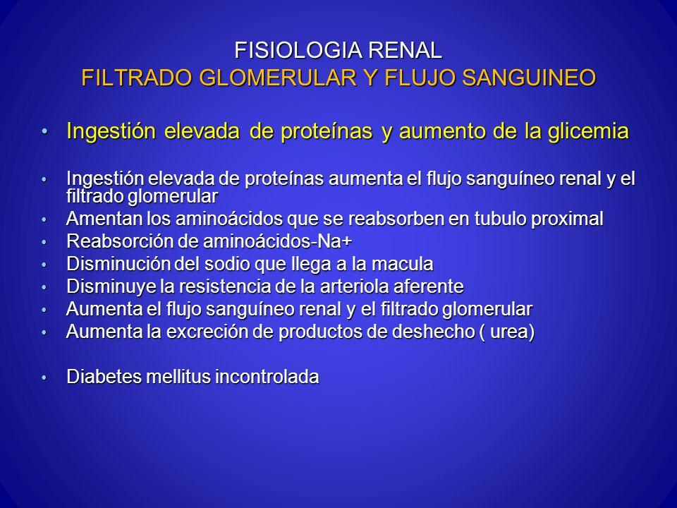 FISIOLOGIA RENAL FILTRADO GLOMERULAR Y FLUJO SANGUINEO Ingestión elevada de proteínas y aumento de la glicemia Ingestión elevada de proteínas y aument