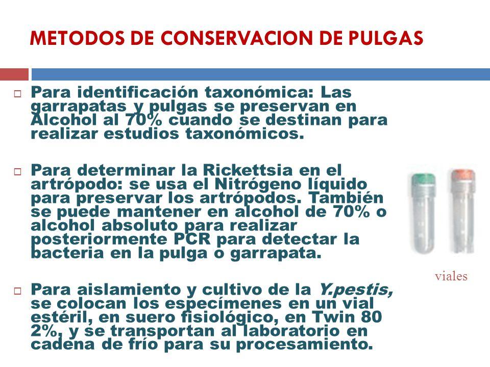 METODOS DE CONSERVACION DE PULGAS Para identificación taxonómica: Las garrapatas y pulgas se preservan en Alcohol al 70% cuando se destinan para reali