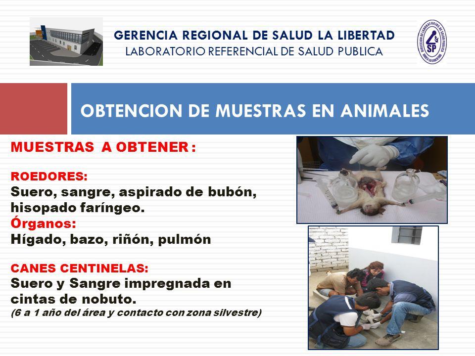 GERENCIA REGIONAL DE SALUD LA LIBERTAD LABORATORIO REFERENCIAL DE SALUD PUBLICA OBTENCION DE MUESTRAS EN ANIMALES MUESTRAS A OBTENER : ROEDORES: Suero