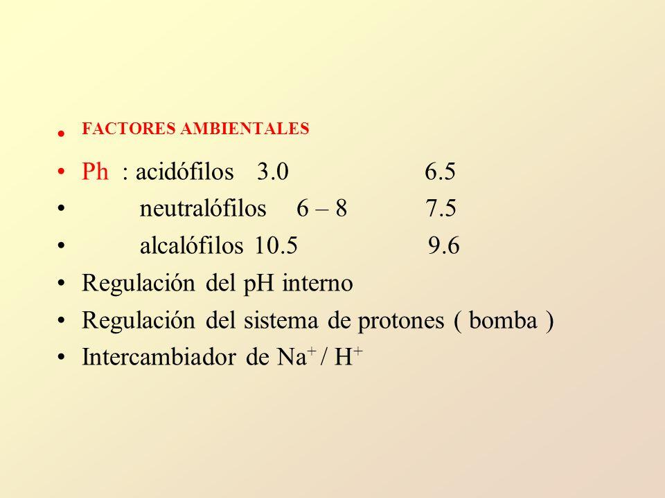 FACTORES AMBIENTALES Ph : acidófilos 3.0 6.5 neutralófilos 6 – 8 7.5 alcalófilos 10.5 9.6 Regulación del pH interno Regulación del sistema de protones ( bomba ) Intercambiador de Na + / H +