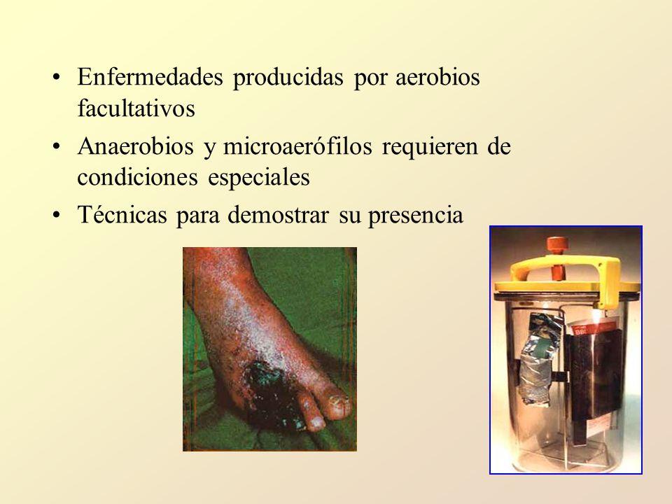 Enfermedades producidas por aerobios facultativos Anaerobios y microaerófilos requieren de condiciones especiales Técnicas para demostrar su presencia