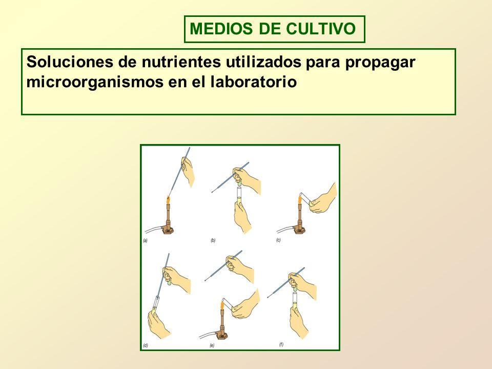 MEDIOS DE CULTIVO Soluciones de nutrientes utilizados para propagar microorganismos en el laboratorio