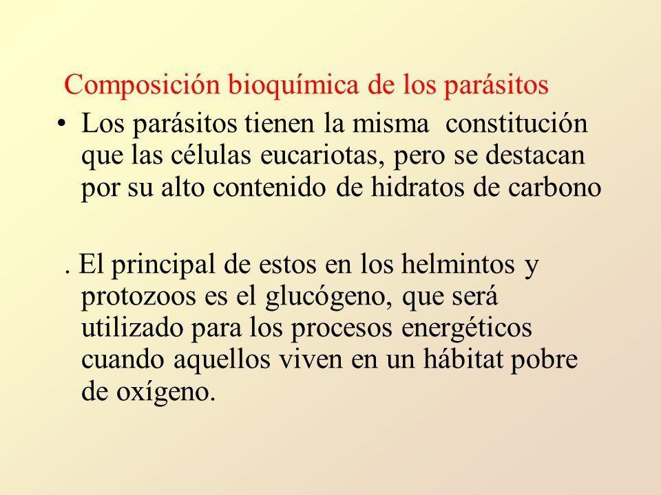 Composición bioquímica de los parásitos Los parásitos tienen la misma constitución que las células eucariotas, pero se destacan por su alto contenido de hidratos de carbono.