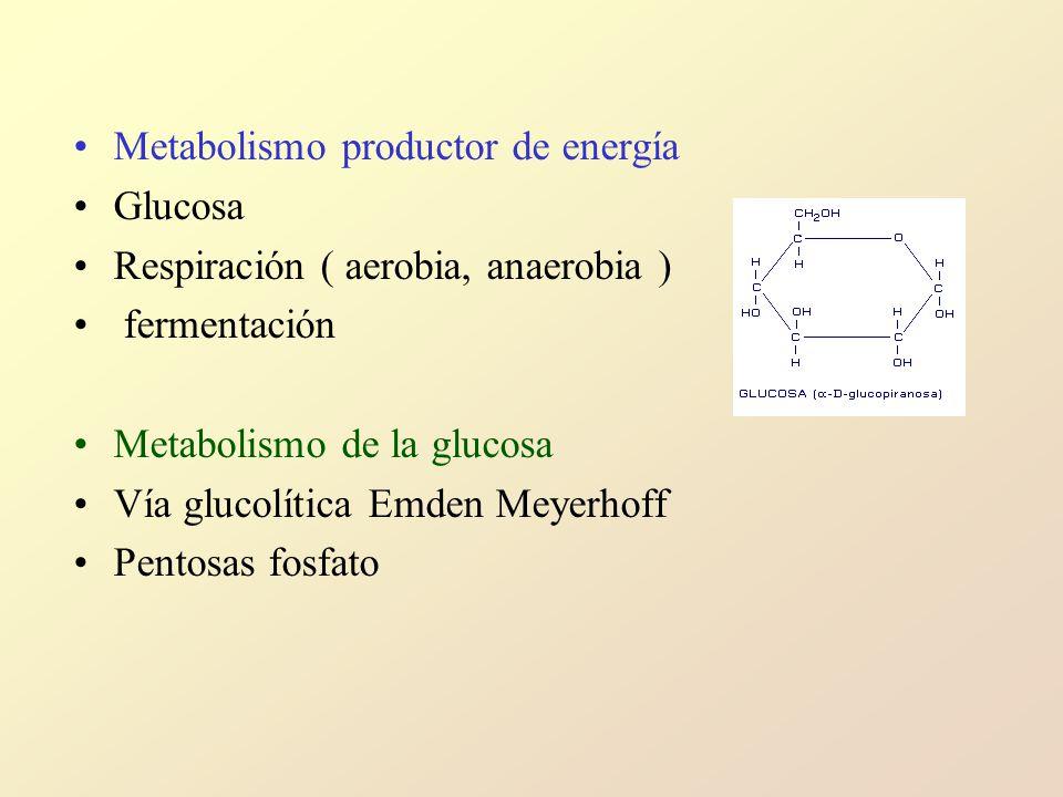 Metabolismo productor de energía Glucosa Respiración ( aerobia, anaerobia ) fermentación Metabolismo de la glucosa Vía glucolítica Emden Meyerhoff Pentosas fosfato