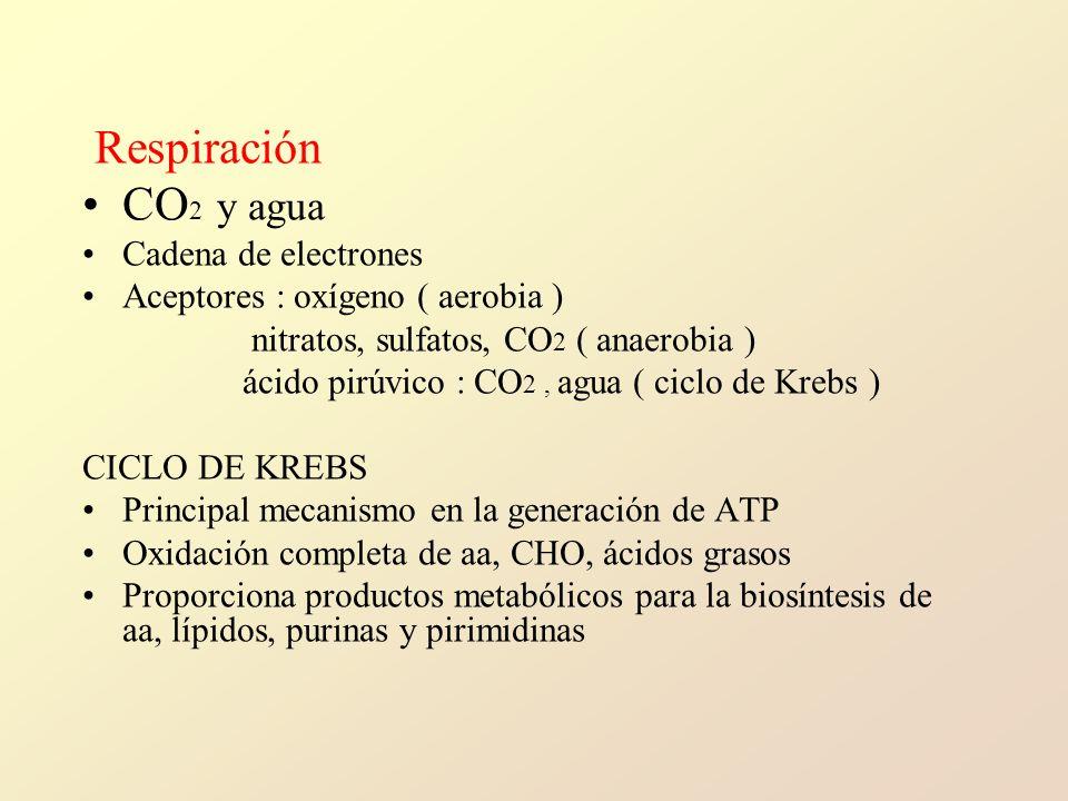 Respiración CO 2 y agua Cadena de electrones Aceptores : oxígeno ( aerobia ) nitratos, sulfatos, CO 2 ( anaerobia ) ácido pirúvico : CO 2, agua ( ciclo de Krebs ) CICLO DE KREBS Principal mecanismo en la generación de ATP Oxidación completa de aa, CHO, ácidos grasos Proporciona productos metabólicos para la biosíntesis de aa, lípidos, purinas y pirimidinas