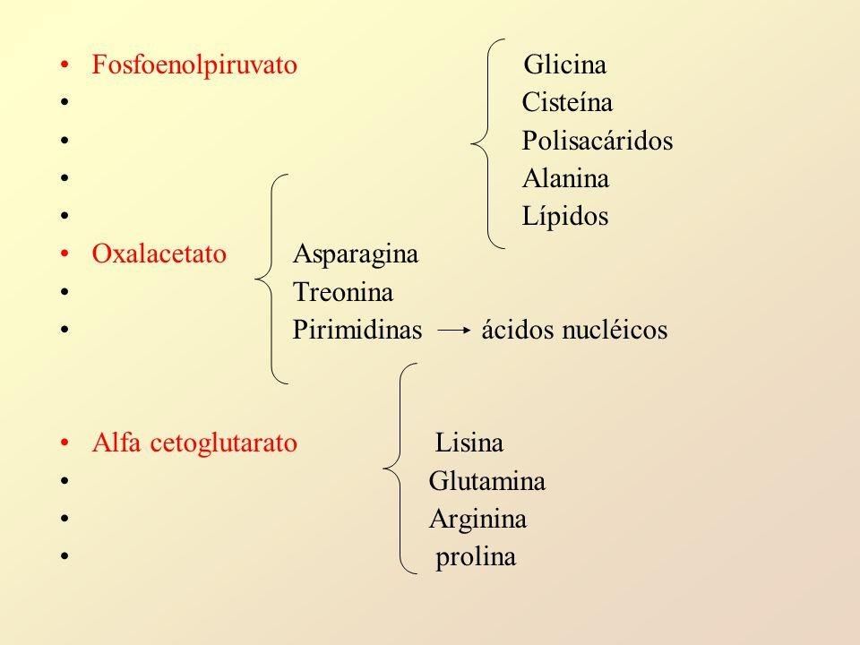Fosfoenolpiruvato Glicina Cisteína Polisacáridos Alanina Lípidos Oxalacetato Asparagina Treonina Pirimidinas ácidos nucléicos Alfa cetoglutarato Lisina Glutamina Arginina prolina