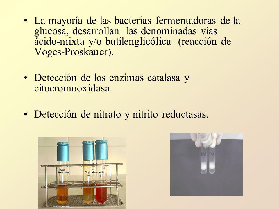 La mayoría de las bacterias fermentadoras de la glucosa, desarrollan las denominadas vías ácido mixta y/o butilenglicólica (reacción de Voges Proskauer).