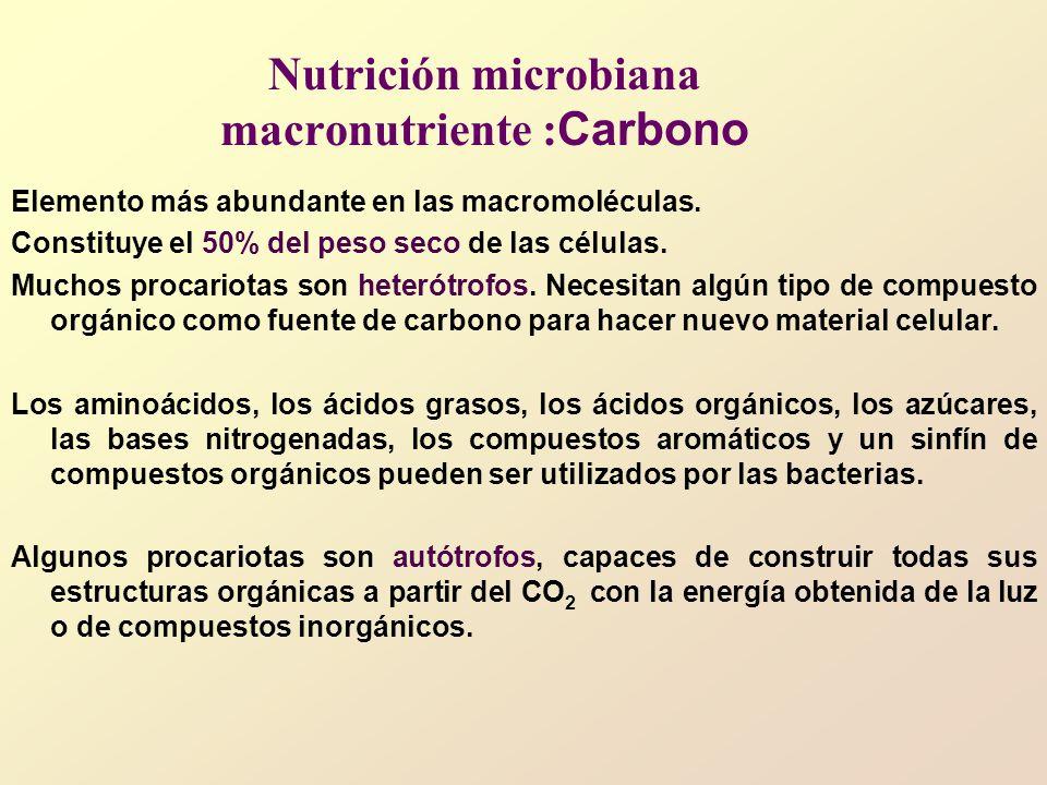 Nutrición microbiana macronutriente : Carbono Elemento más abundante en las macromoléculas.