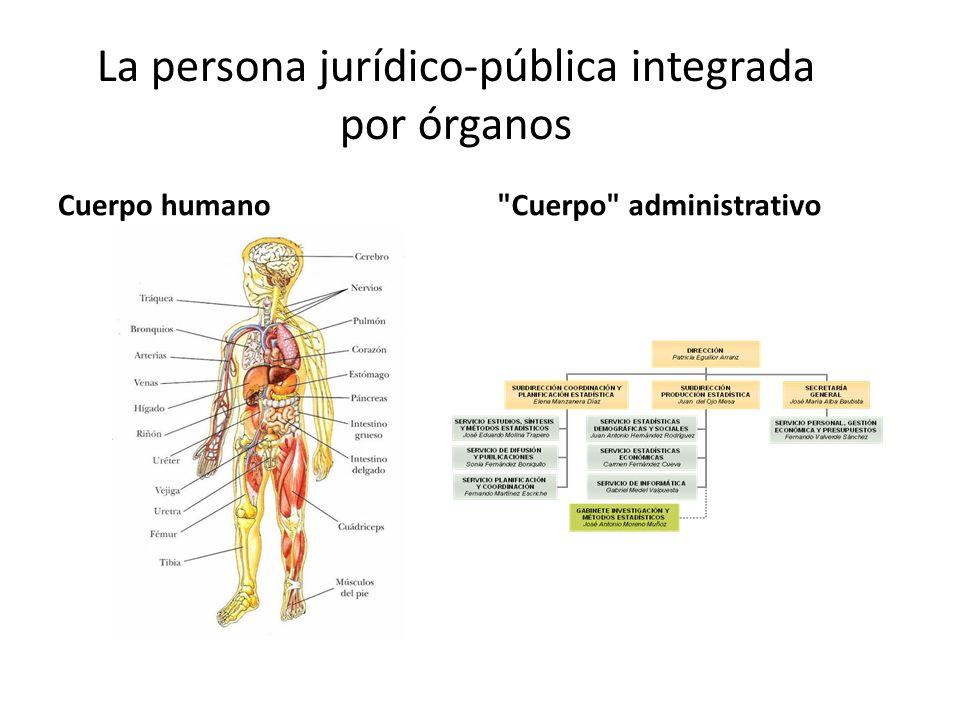 La persona jurídico-pública integrada por órganos Cuerpo humano Cuerpo administrativo