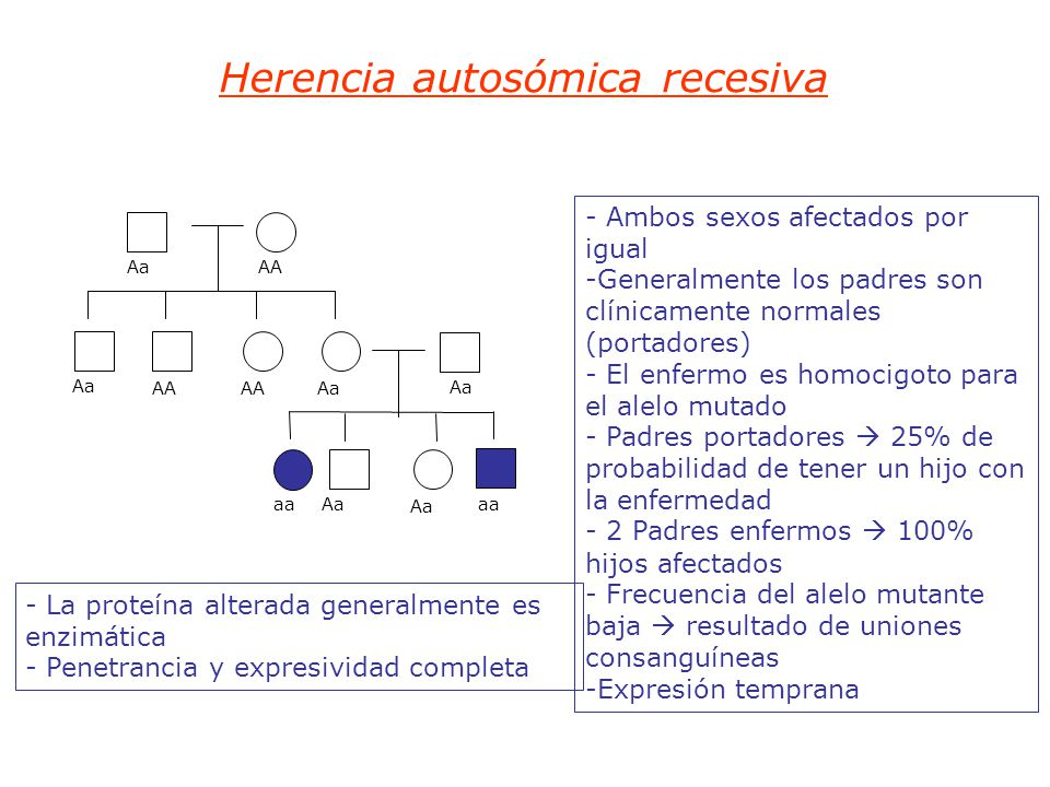 Herencia autosómica recesiva - Ambos sexos afectados por igual -Generalmente los padres son clínicamente normales (portadores) - El enfermo es homocigoto para el alelo mutado - Padres portadores 25% de probabilidad de tener un hijo con la enfermedad - 2 Padres enfermos 100% hijos afectados - Frecuencia del alelo mutante baja resultado de uniones consanguíneas -Expresión temprana - La proteína alterada generalmente es enzimática - Penetrancia y expresividad completa Aa AA Aa AA Aa aa