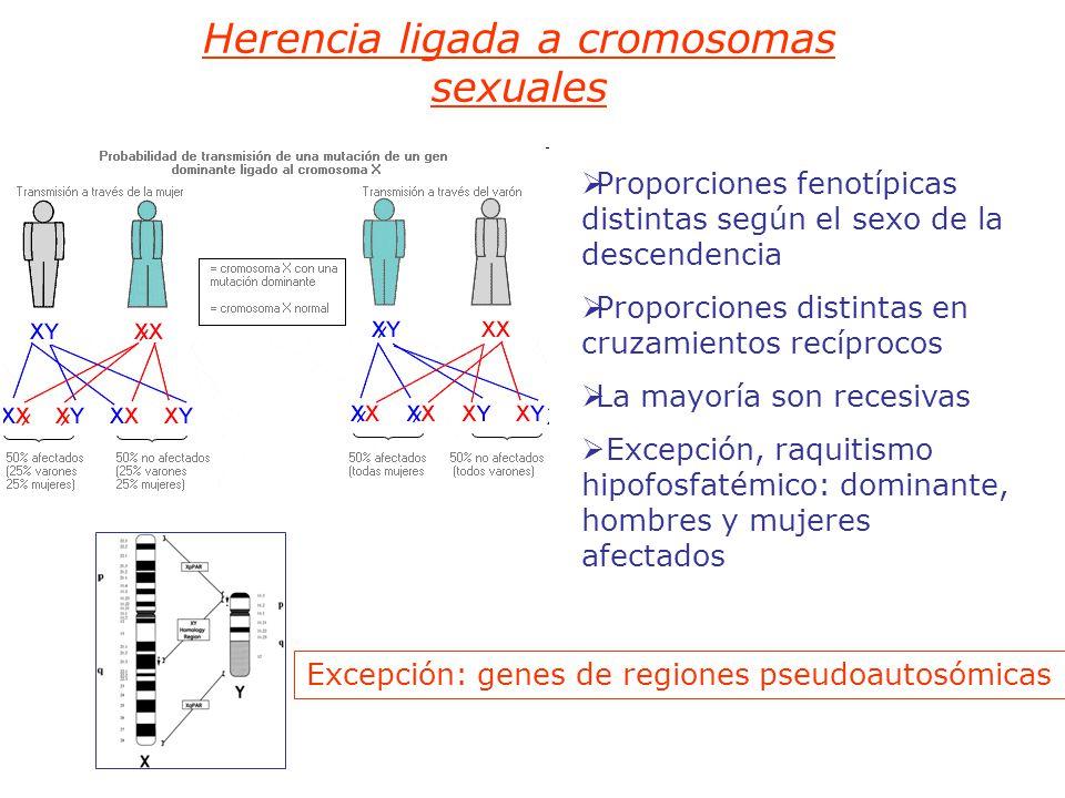 Herencia ligada a cromosomas sexuales Proporciones fenotípicas distintas según el sexo de la descendencia Proporciones distintas en cruzamientos recíprocos La mayoría son recesivas Excepción, raquitismo hipofosfatémico: dominante, hombres y mujeres afectados Excepción: genes de regiones pseudoautosómicas