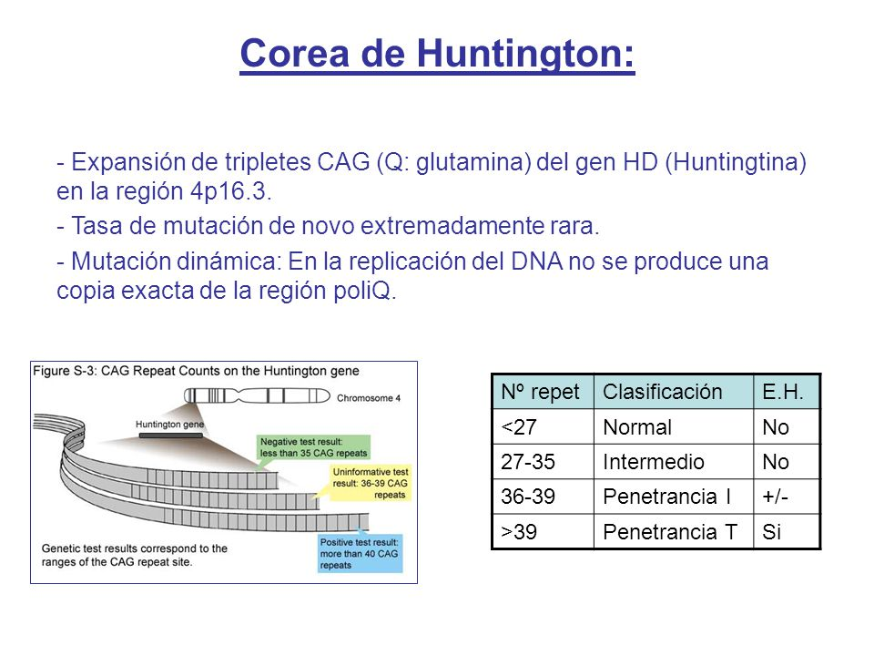 - Expansión de tripletes CAG (Q: glutamina) del gen HD (Huntingtina) en la región 4p16.3. - Tasa de mutación de novo extremadamente rara. - Mutación d