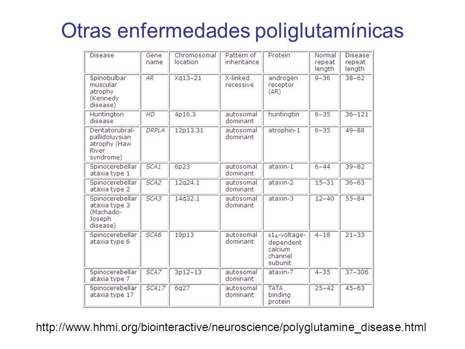 Otras enfermedades poliglutamínicas http://www.hhmi.org/biointeractive/neuroscience/polyglutamine_disease.html