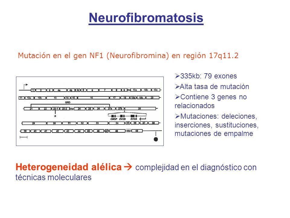 Mutación en el gen NF1 (Neurofibromina) en región 17q11.2 335kb: 79 exones Alta tasa de mutación Contiene 3 genes no relacionados Mutaciones: deleciones, inserciones, sustituciones, mutaciones de empalme Heterogeneidad alélica complejidad en el diagnóstico con técnicas moleculares Neurofibromatosis