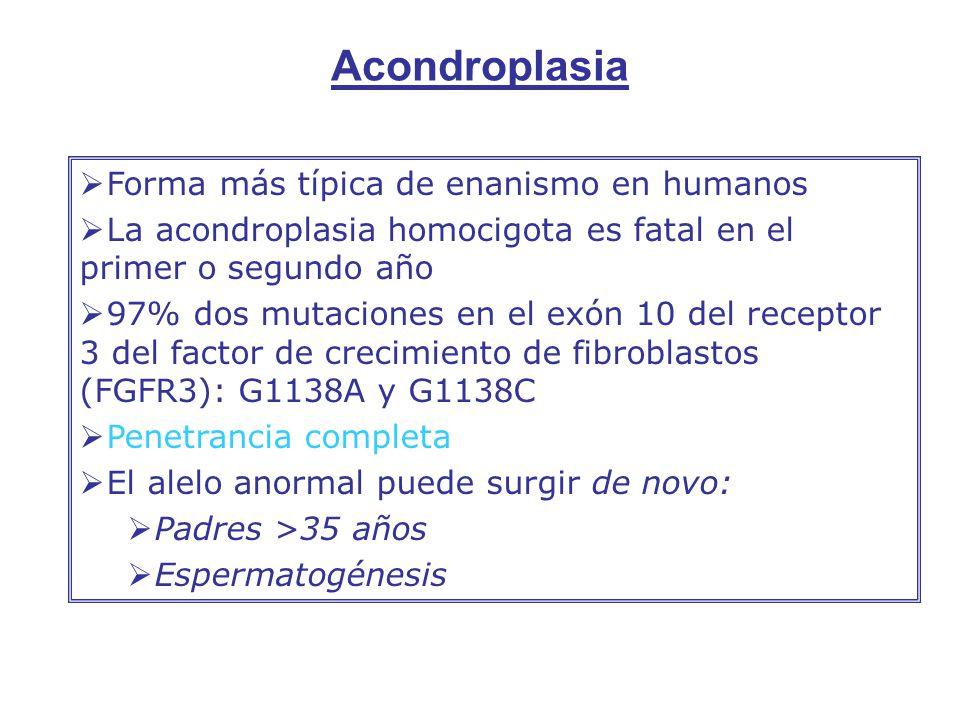 Forma más típica de enanismo en humanos La acondroplasia homocigota es fatal en el primer o segundo año 97% dos mutaciones en el exón 10 del receptor 3 del factor de crecimiento de fibroblastos (FGFR3): G1138A y G1138C Penetrancia completa El alelo anormal puede surgir de novo: Padres >35 años Espermatogénesis Acondroplasia