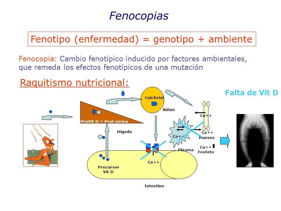 Fenotipo (enfermedad) = genotipo + ambiente Fenocopias Fenocopia: Cambio fenotípico inducido por factores ambientales, que remeda los efectos fenotípicos de una mutación Raquitismo nutricional: Precursor Vit D Intestino ProVit D + Prot sérica Hígado Riñón Calcitriol Ca++ Huesos Ca++ Plasma Ca++ Fosfato Ca++ Falta de Vit D