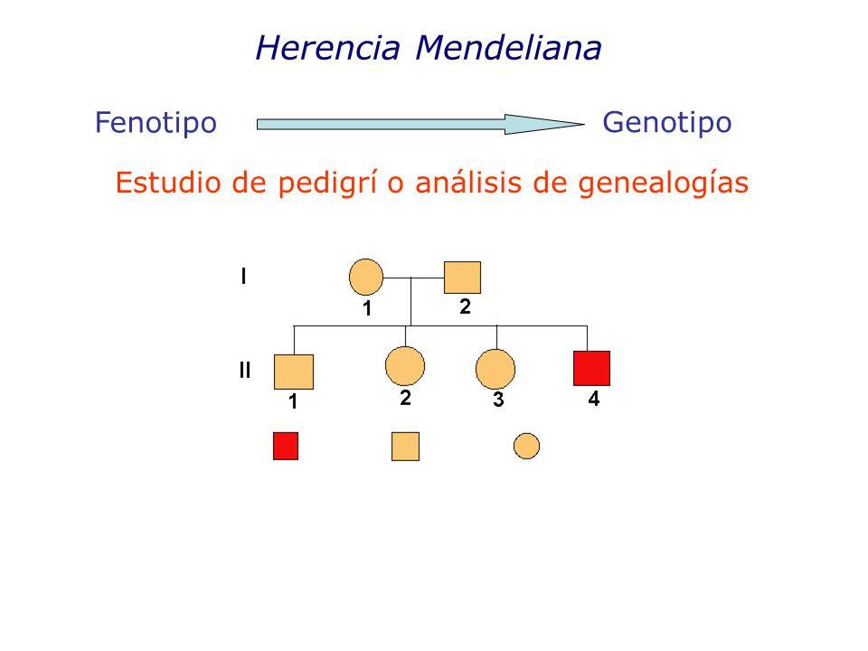 Herencia Mendeliana Fenotipo Genotipo Estudio de pedigrí o análisis de genealogías