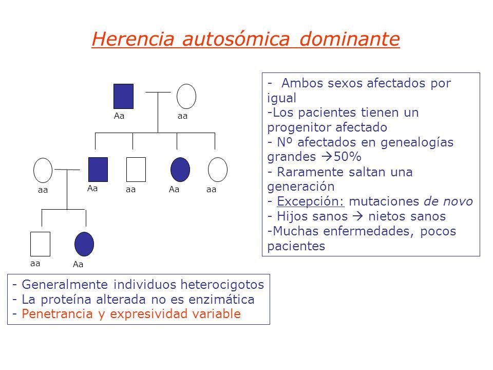 Herencia autosómica dominante - Ambos sexos afectados por igual -Los pacientes tienen un progenitor afectado - Nº afectados en genealogías grandes 50% - Raramente saltan una generación - Excepción: mutaciones de novo - Hijos sanos nietos sanos -Muchas enfermedades, pocos pacientes aa Aaaa Aa aaAaaa Aa - Generalmente individuos heterocigotos - La proteína alterada no es enzimática - Penetrancia y expresividad variable