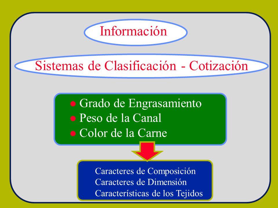 Información Sistemas de Clasificación - Cotización Grado de Engrasamiento Peso de la Canal Color de la Carne Caracteres de Composición Caracteres de D