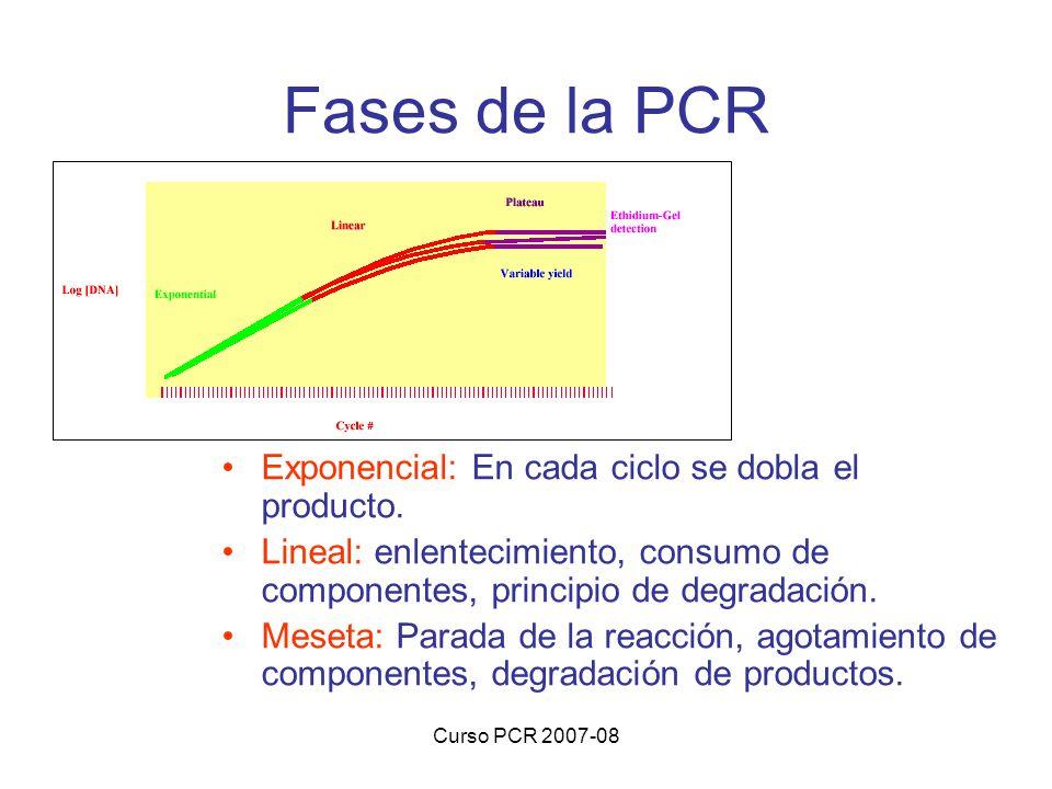 Curso PCR 2007-08 Fases de la PCR Exponencial: En cada ciclo se dobla el producto. Lineal: enlentecimiento, consumo de componentes, principio de degra