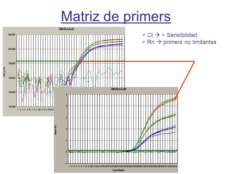 Curso PCR 2007-08 Matriz de primers Sensibilidad > Rn primers no limitantes