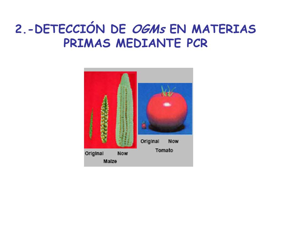 2.-DETECCIÓN DE OGMs EN MATERIAS PRIMAS MEDIANTE PCR
