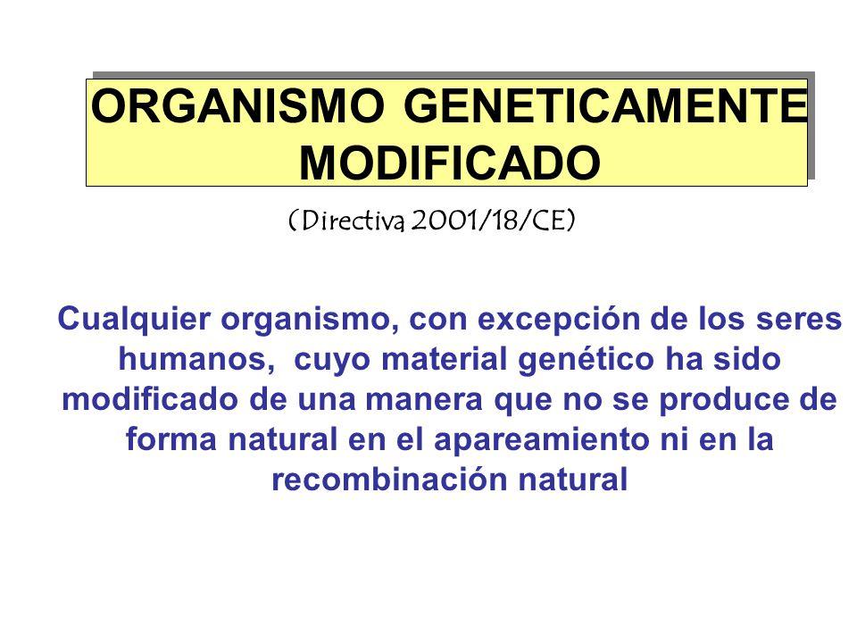 ORGANISMO GENETICAMENTE MODIFICADO (Directiva 2001/18/CE) Cualquier organismo, con excepción de los seres humanos, cuyo material genético ha sido modi