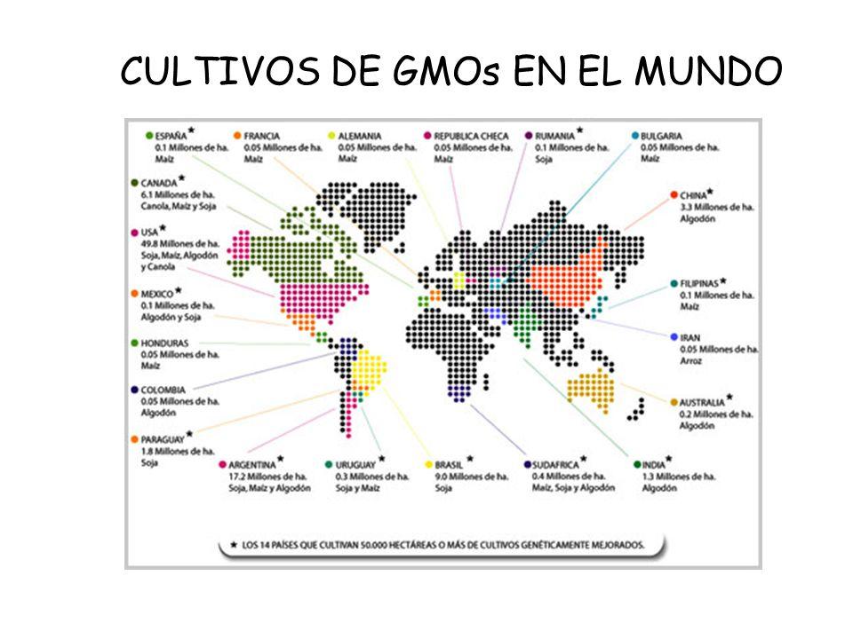 CULTIVOS DE GMOs EN EL MUNDO