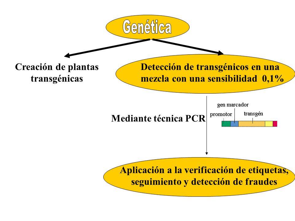 Creación de plantas transgénicas Detección de transgénicos en una mezcla con una sensibilidad 0,1% Aplicación a la verificación de etiquetas, seguimie