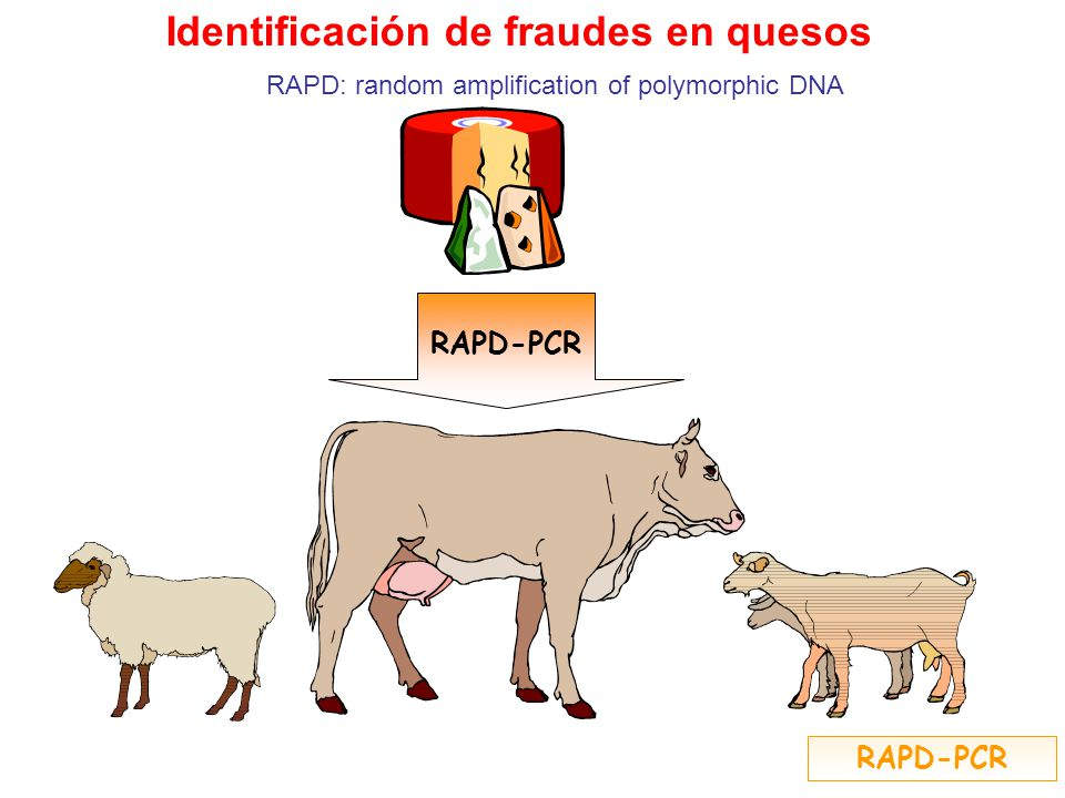RAPD-PCR Identificación de fraudes en quesos RAPD: random amplification of polymorphic DNA