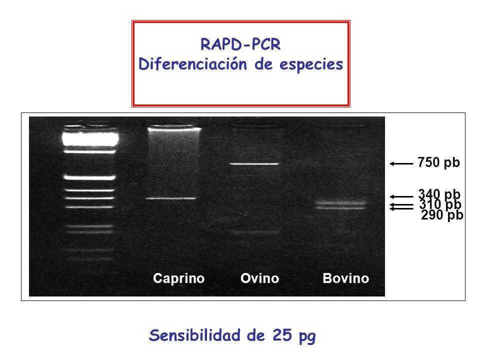 Sensibilidad de 25 pg 310 pb 290 pb 750 pb RAPD-PCR Diferenciación de especies 340 pb Caprino Ovino Bovino