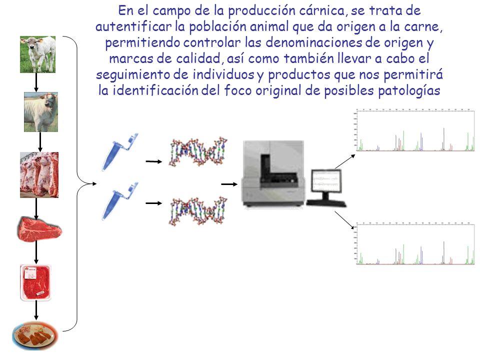 Creación de plantas transgénicas Detección de transgénicos en una mezcla con una sensibilidad 0,1% Aplicación a la verificación de etiquetas, seguimiento y detección de fraudes Mediante técnica PCR