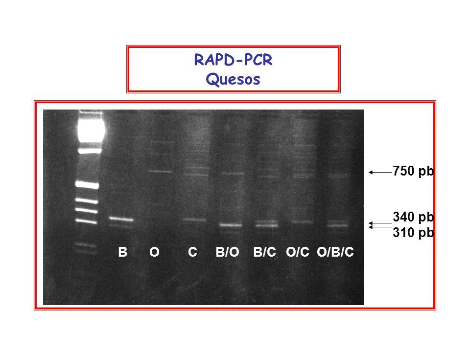 340 pb 310 pb 750 pb B O C B/O B/C O/C O/B/C RAPD-PCR Quesos
