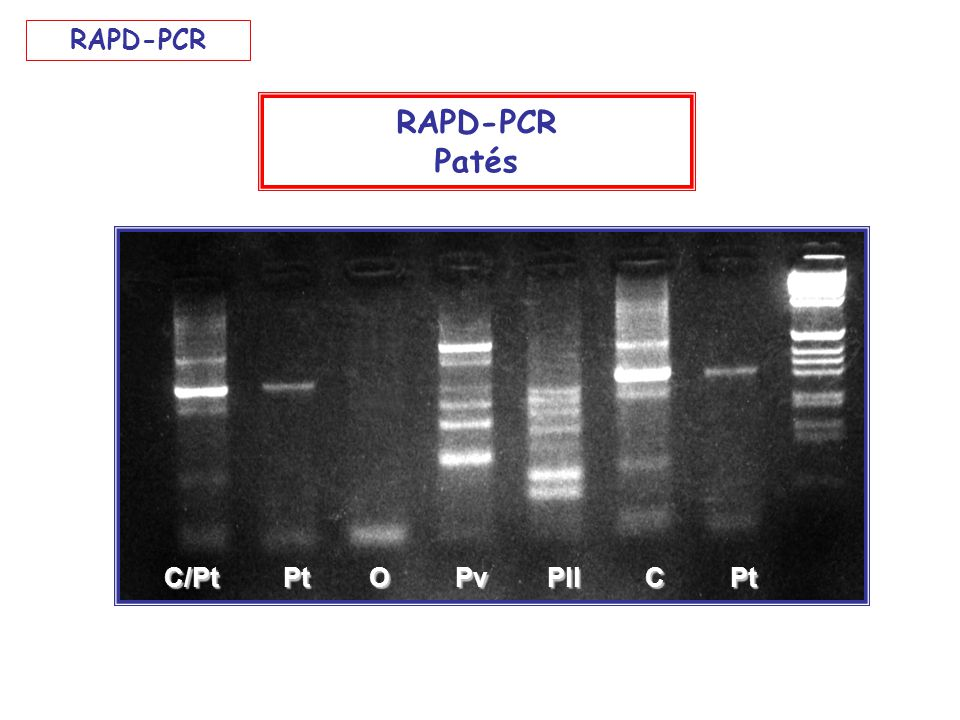 C/Pt Pt O Pv Pll C Pt RAPD-PCR Patés RAPD-PCR