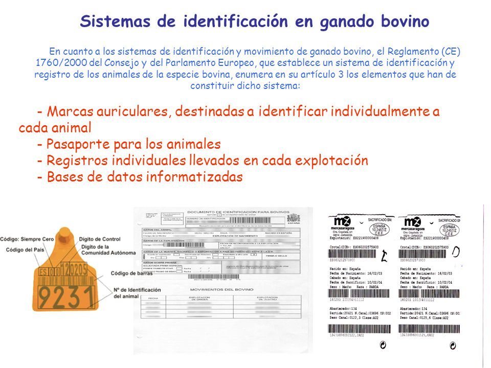 Sistemas de identificación en ganado bovino En cuanto a los sistemas de identificación y movimiento de ganado bovino, el Reglamento (CE) 1760/2000 del