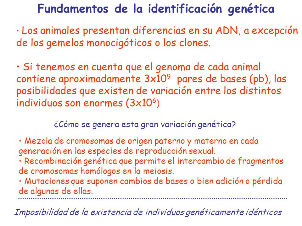 BASE DE DATOS sexo explotación procedencia número de identificación individual identificación del padre y de la madre Resultados de genotipos IDENTIFICACIÓN GENÉTICA 1.Toma de muestra: Cualquier muestra de células nucleadas, casi en cualquier estado.