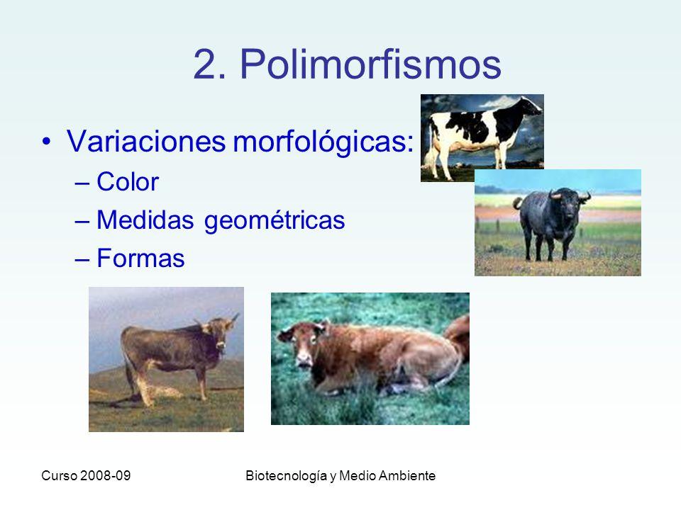 Curso 2008-09Biotecnología y Medio Ambiente 2. Polimorfismos Variaciones morfológicas: –Color –Medidas geométricas –Formas