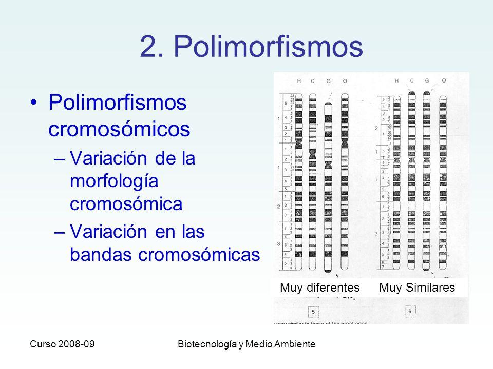Curso 2008-09Biotecnología y Medio Ambiente 2. Polimorfismos Polimorfismos cromosómicos –Variación de la morfología cromosómica –Variación en las band