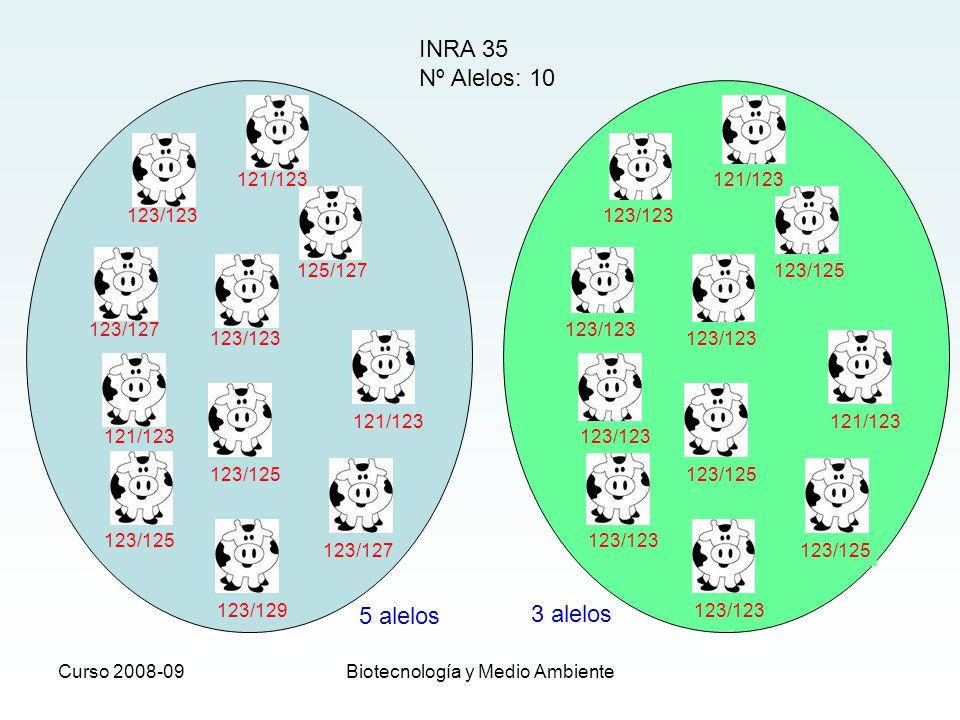 Curso 2008-09Biotecnología y Medio Ambiente INRA 35 Nº Alelos: 10 5 alelos 3 alelos 123/123 121/123 125/127 123/123 123/127 121/123 123/125 121/123 12