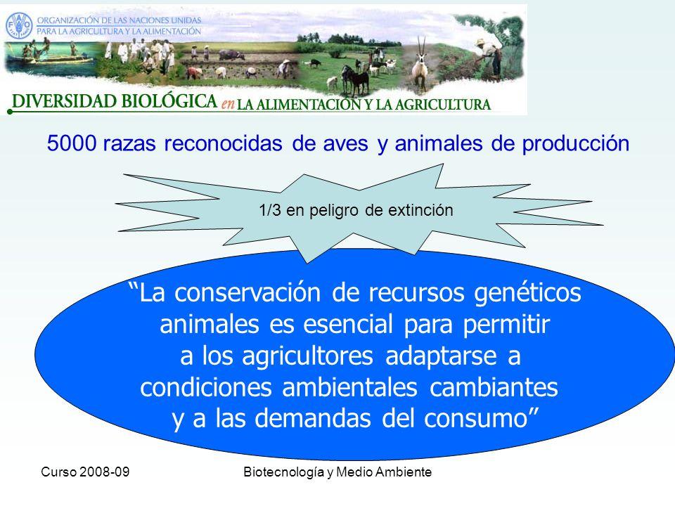 Curso 2008-09Biotecnología y Medio Ambiente Situación en España EFE: Casi el 70% de las razas autóctonas del país están en peligro de extinción El 69,88 por ciento de las razas autóctonas del país están en peligro de extinción ya que, del total de 176 existentes, 123 se hallan en esa situación, ha informado hoy en Badajoz la subdirectora de Recursos Naturales del Ministerio de Medio Ambiente y Medio Rural y Marino (MARM), Isabel García Sanz.