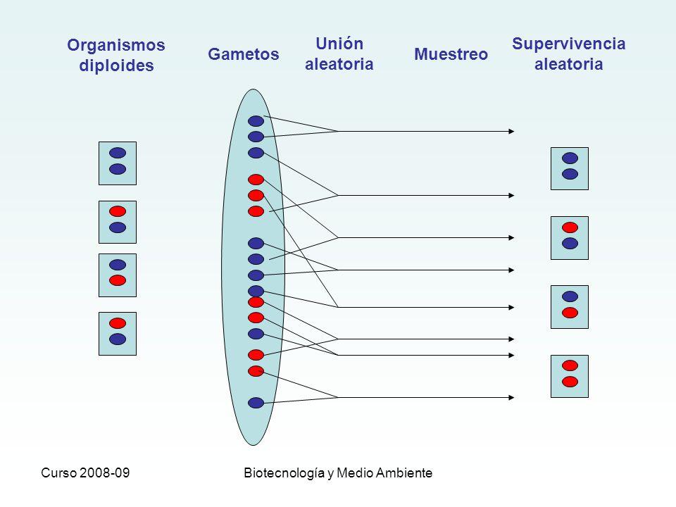 Curso 2008-09Biotecnología y Medio Ambiente Organismos diploides Gametos Muestreo Supervivencia aleatoria Unión aleatoria