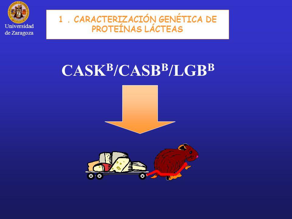CASK B /CASB B /LGB B 1. CARACTERIZACIÓN GENÉTICA DE PROTEÍNAS LÁCTEAS Universidad de Zaragoza