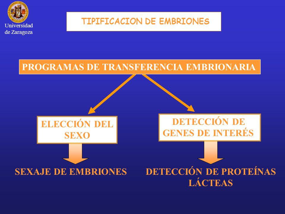 DETECCIÓN DE PROTEÍNAS LÁCTEAS SEXAJE DE EMBRIONES PROGRAMAS DE TRANSFERENCIA EMBRIONARIA ELECCIÓN DEL SEXO DETECCIÓN DE GENES DE INTERÉS TIPIFICACION DE EMBRIONES Universidad de Zaragoza