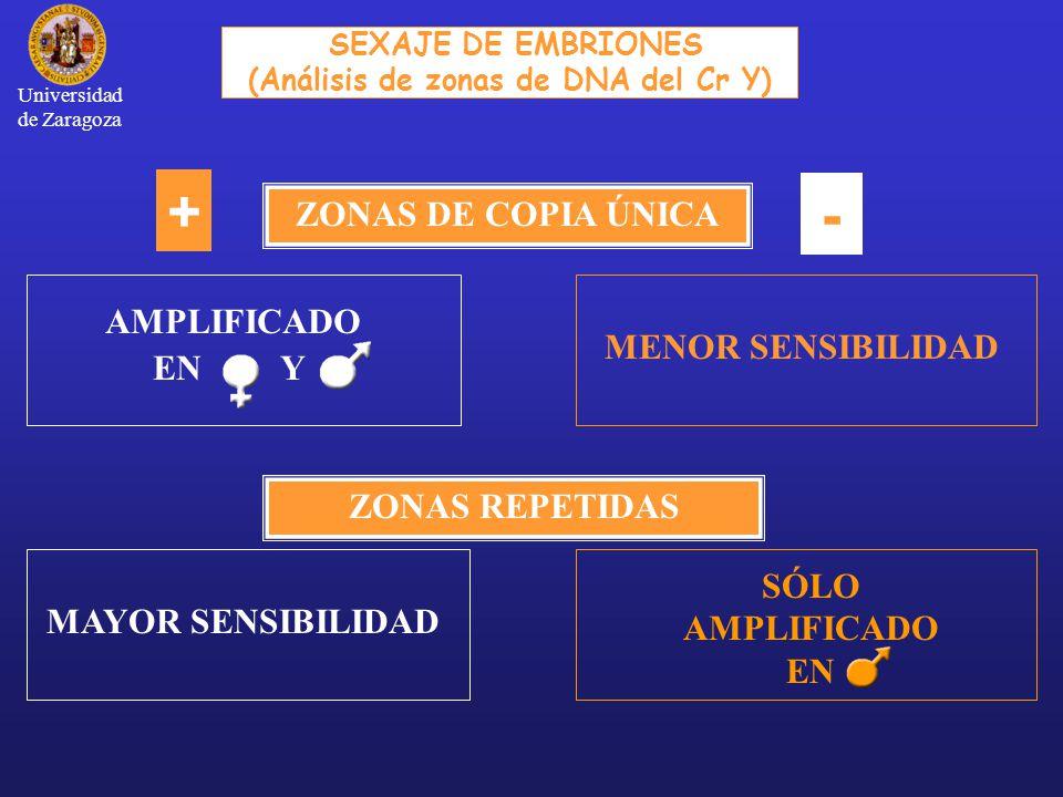 ZONAS DE COPIA ÚNICA ZONAS REPETIDAS + - SEXAJE DE EMBRIONES (Análisis de zonas de DNA del Cr Y) AMPLIFICADO EN Y MENOR SENSIBILIDAD SÓLO AMPLIFICADO EN MAYOR SENSIBILIDAD Universidad de Zaragoza