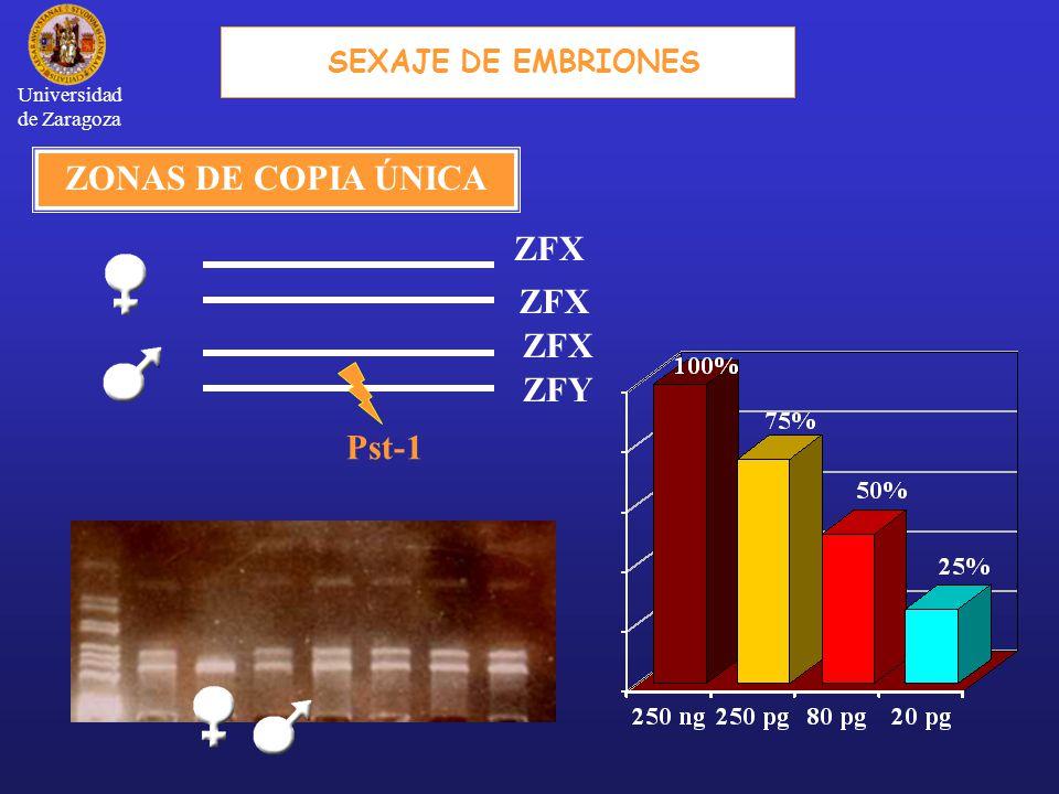 SEXAJE DE EMBRIONES ZFX ZFY ZONAS DE COPIA ÚNICA Pst-1 Universidad de Zaragoza